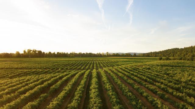 Geração solar distribuída aumenta competitividade de vinícolas da Campanha Gaúcha